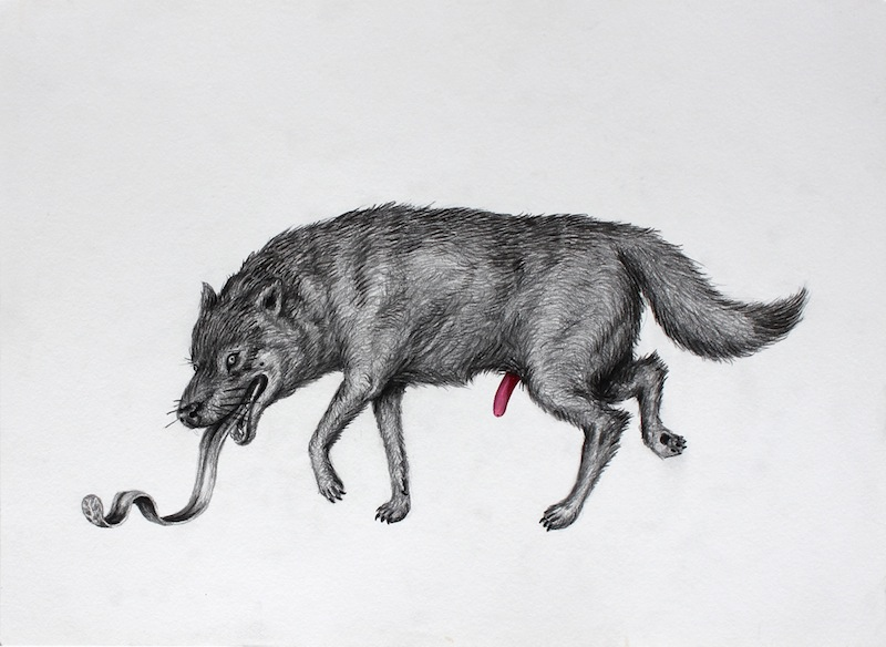Wolf Realized