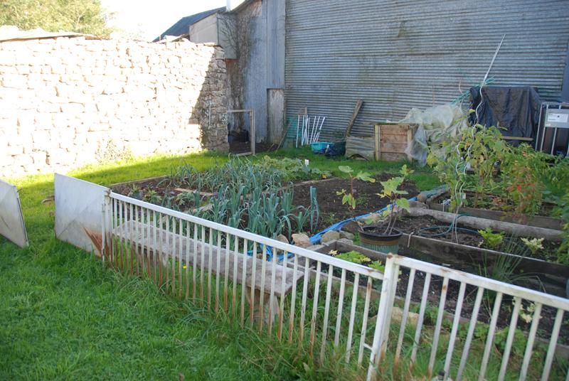 my winter potager (kitchen garden) 6pm today...
