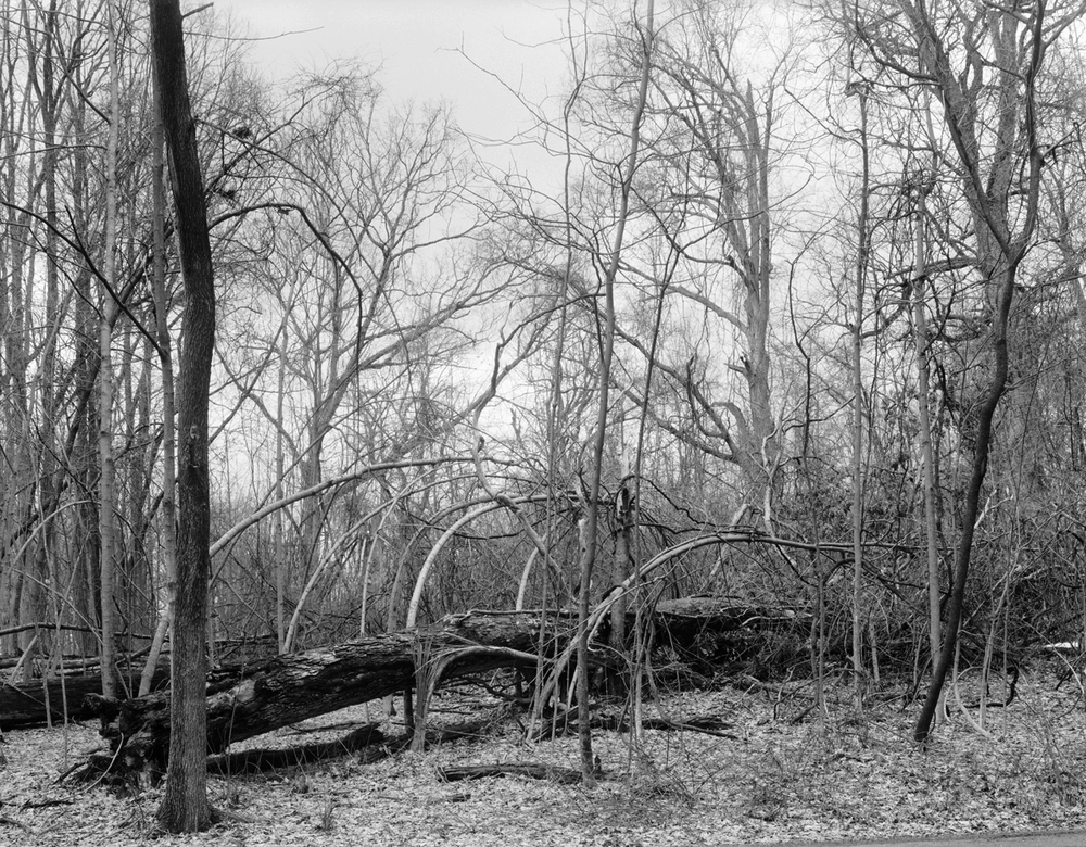 Fallen Tree, Tivoli, New York