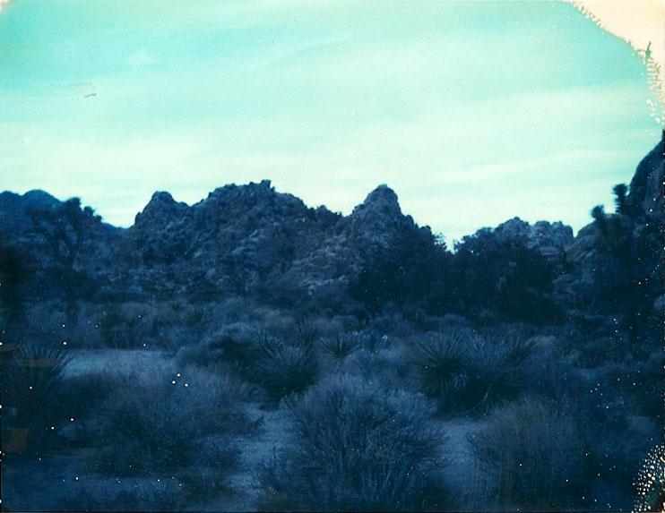Josuha Tree Polaroid 4
