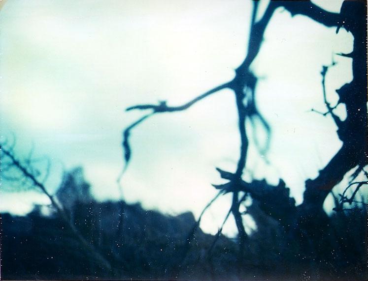 Josuha Tree Polaroid 6