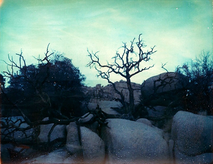 Josuha Tree Polaroid 8
