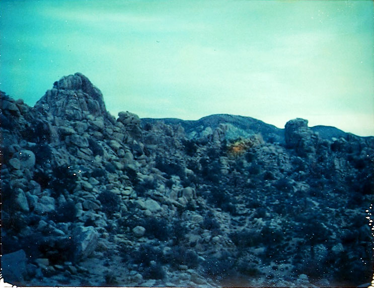 Josuha Tree Polaroid 1