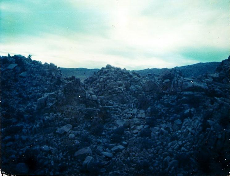 Josuha Tree Polaroid 12