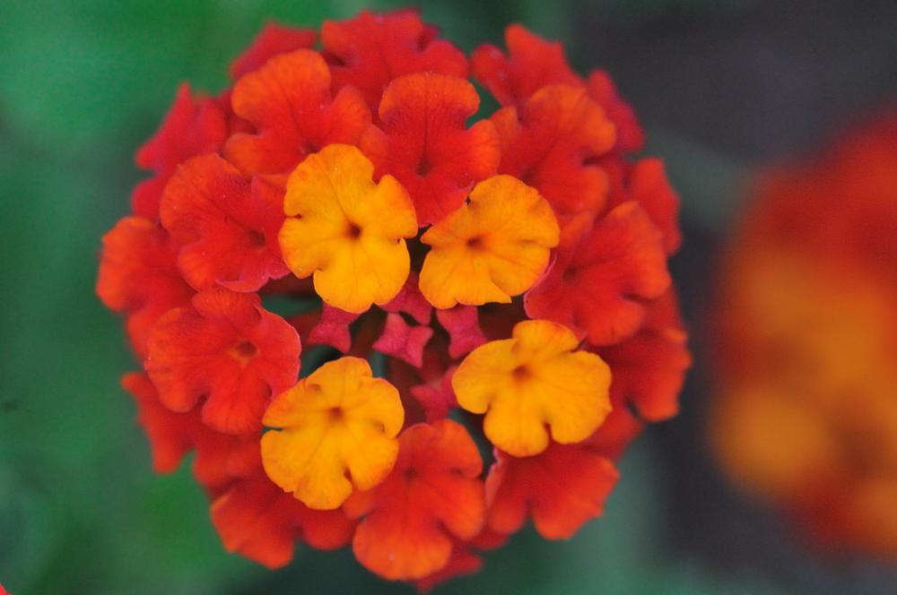 multi_flower2.jpg