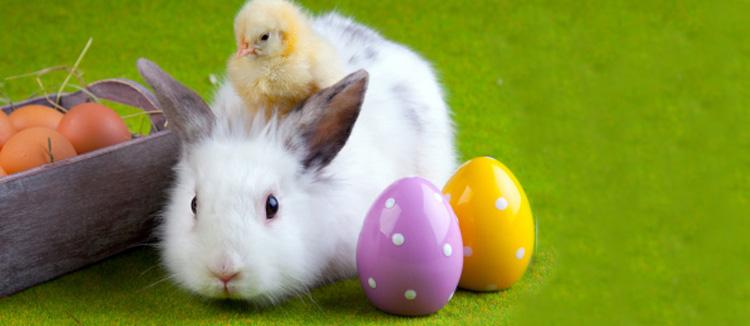 La peur du lapin de p ques je suis une maman - 4 images 1 mot poussin lapin ...
