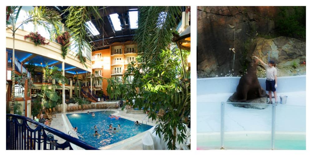 ensuite nous avions envie de tester le fameux htel qubec dont tout le monde parle vous savez cet htel avec piscine intrieure palmiers