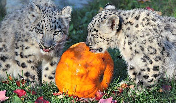 Crédit photo : site web du Zoo de Granby