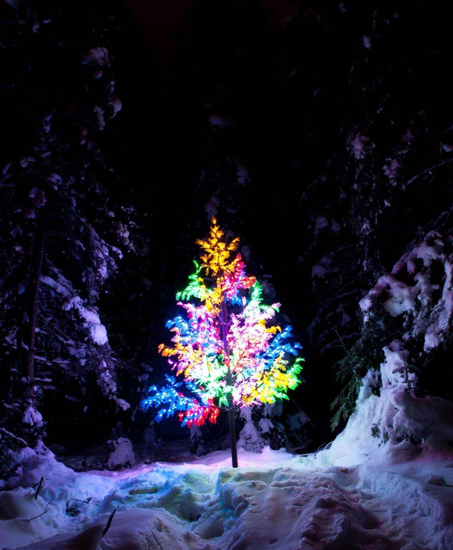 Crédit photo : Forêt Enchantée