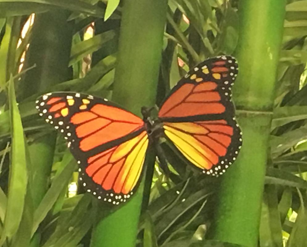 Le nœud papillon de Passe-Montagne…