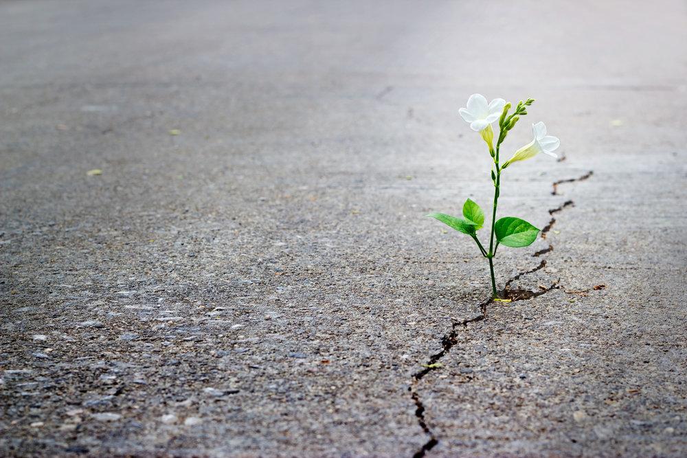 vie de parents-vie de maman-bon coup-crise-erreur-s'escuser-se reprendre-fierté-rectifier le tir-job de mère-témoignage-réflexion-#momfails-fail-échec-espoir-Je suis une maman-Jaime Damak