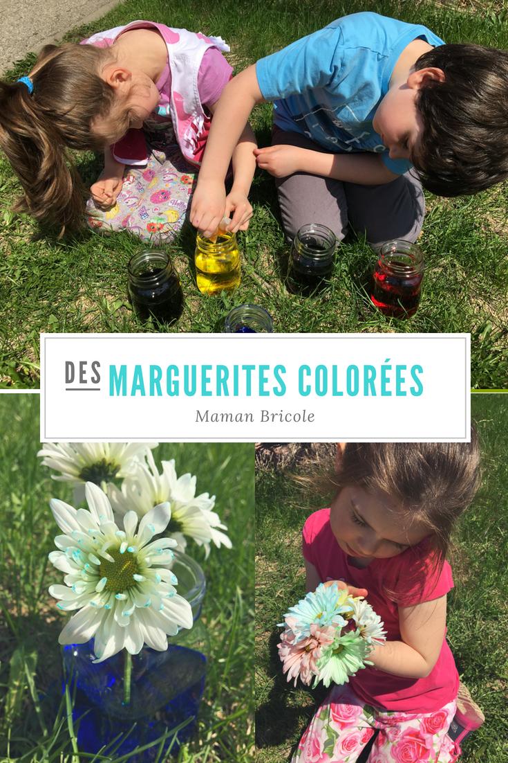 marguerites-fleurs-fleurs colorées-couleurs-met de la couleur dans ta vie-colorer des fleurs-colorant alimentaire-expérience-plaisir-enfants-simplicité-#mamanbricole-Maman Bricole-Je suis une maman   Article rédigé par Véronique Désormeaux   Suivez-nous sur  Facebook  Suivez-nous sur Instagram