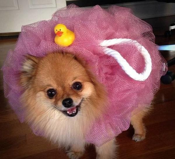 Costumes d'Halloween pour les animaux-Halloween-Chiens-Chats-déguiser-costume-déguisements-jouer-costume mignon pour animal de compagnie-idée-Je suis une maman