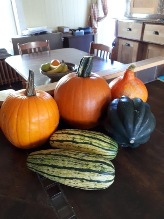 Courges-recettes-repas-apprêter les courges-souper-courge farcie au boeuf et au légumes-courges farcies au porc haché et lentilles-courge spaghetti et boulettes de viande-maman-famille-idée repas-enfants- automne-inspiration repas-menu de la semaine-Je suis une maman