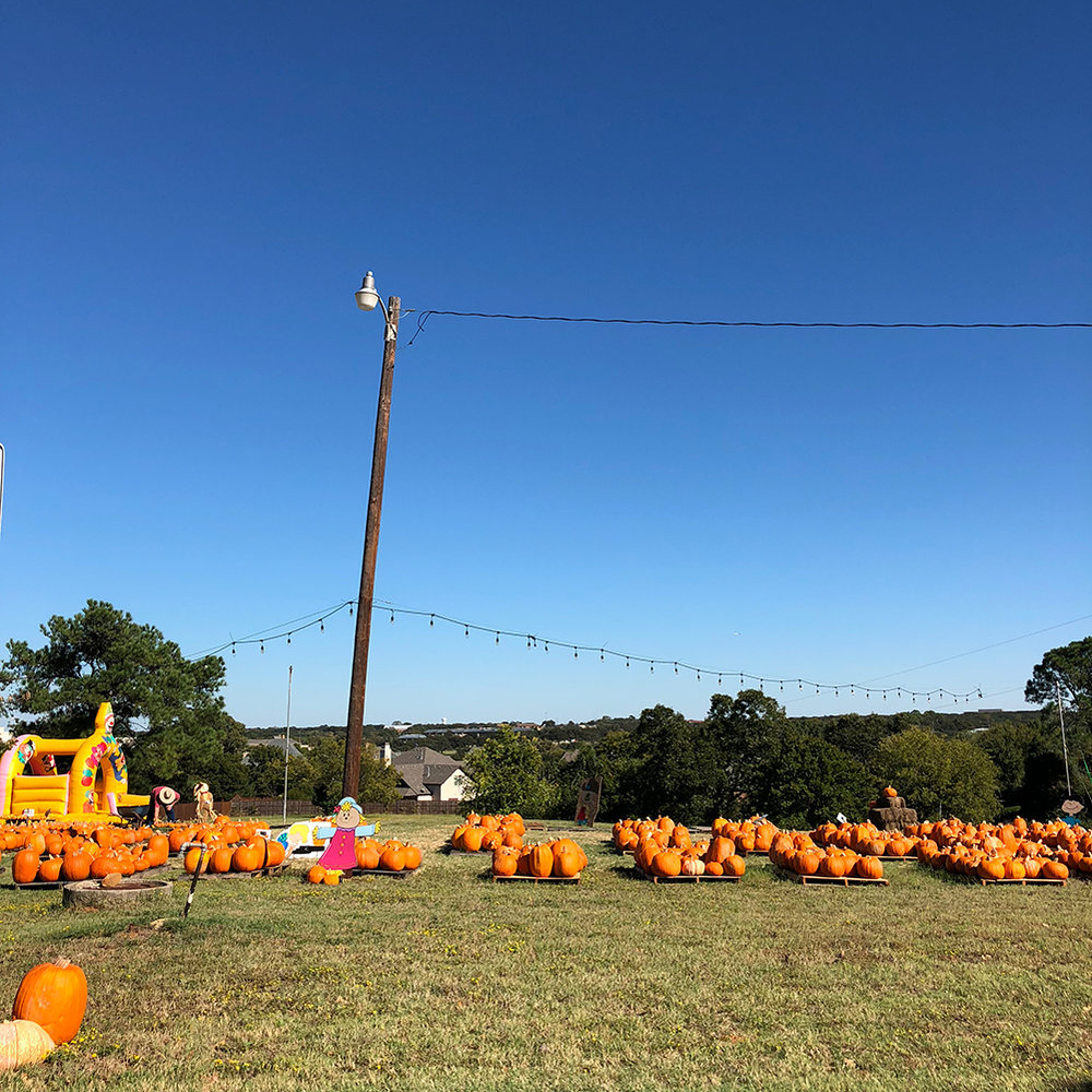 Dallas pumpkin patch