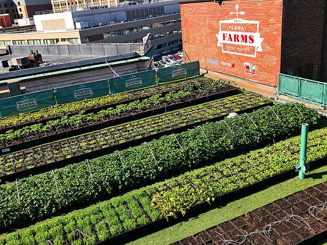 Fenway_Farm_650_101818.jpg