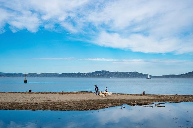 A view of The San Francisco Bay from the edge of Crissy Field in San Francisco. 📷: 35mm - ISO 100 - f/8 - 1/250s