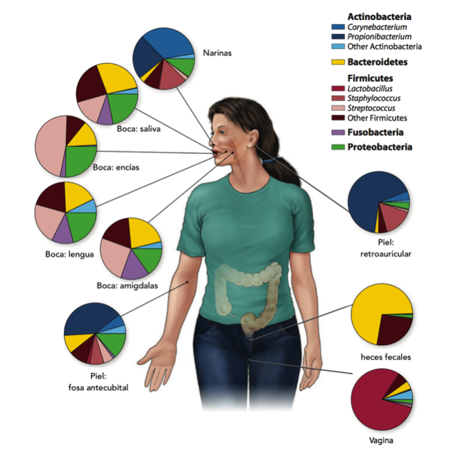 Figura 4. Proporciones de poblaciones microbioanas en distintas regiones del cuerpo humano