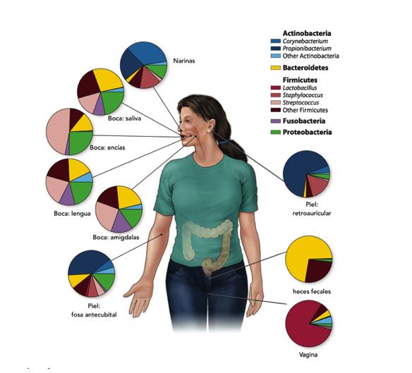 Figura 2. Porcentaje de bacterias presentes en algunas regiones del ser humano