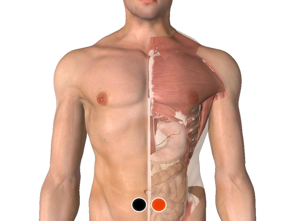 Colon transverso - colon transverso
