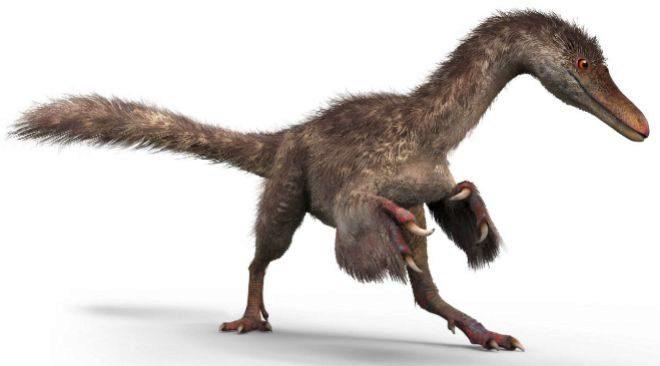 Reconstrucción del aspecto de un pequeño celurosaurio.  Chung-tat Cheung/ Yi Liu
