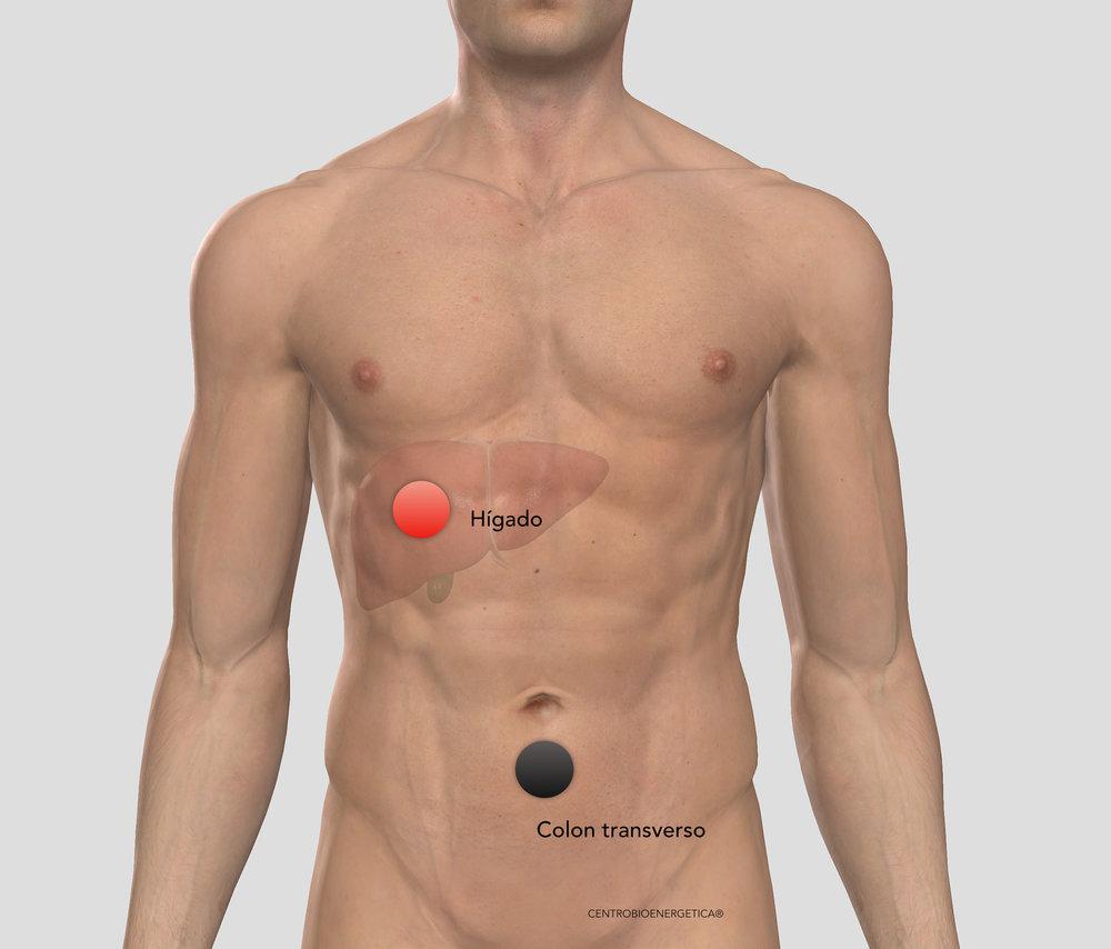 Colon transverso - higado.jpg