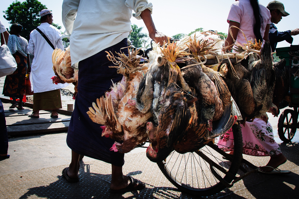 Chicken bike coming off the Dala ferry