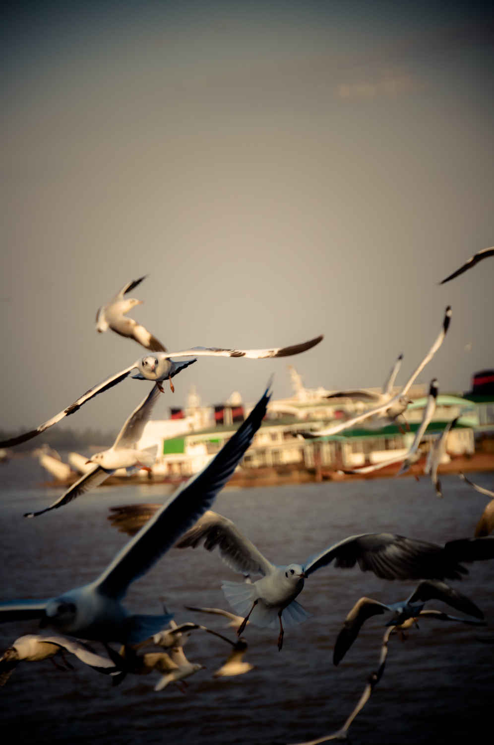 Heading back to Yangon, the Seagulls flock to the side of the ferry