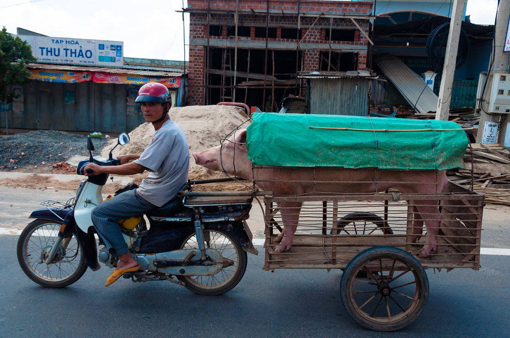 Pigmobile, Central Vietnam