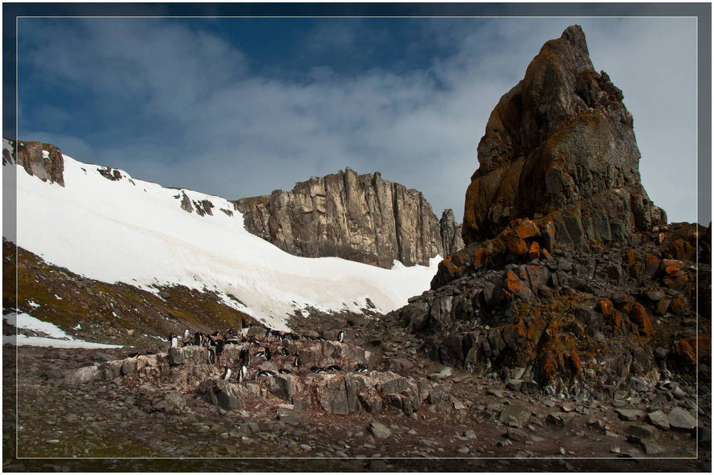 Gentoo Penguin colony - Antarctica (c) Dustin Main 2010