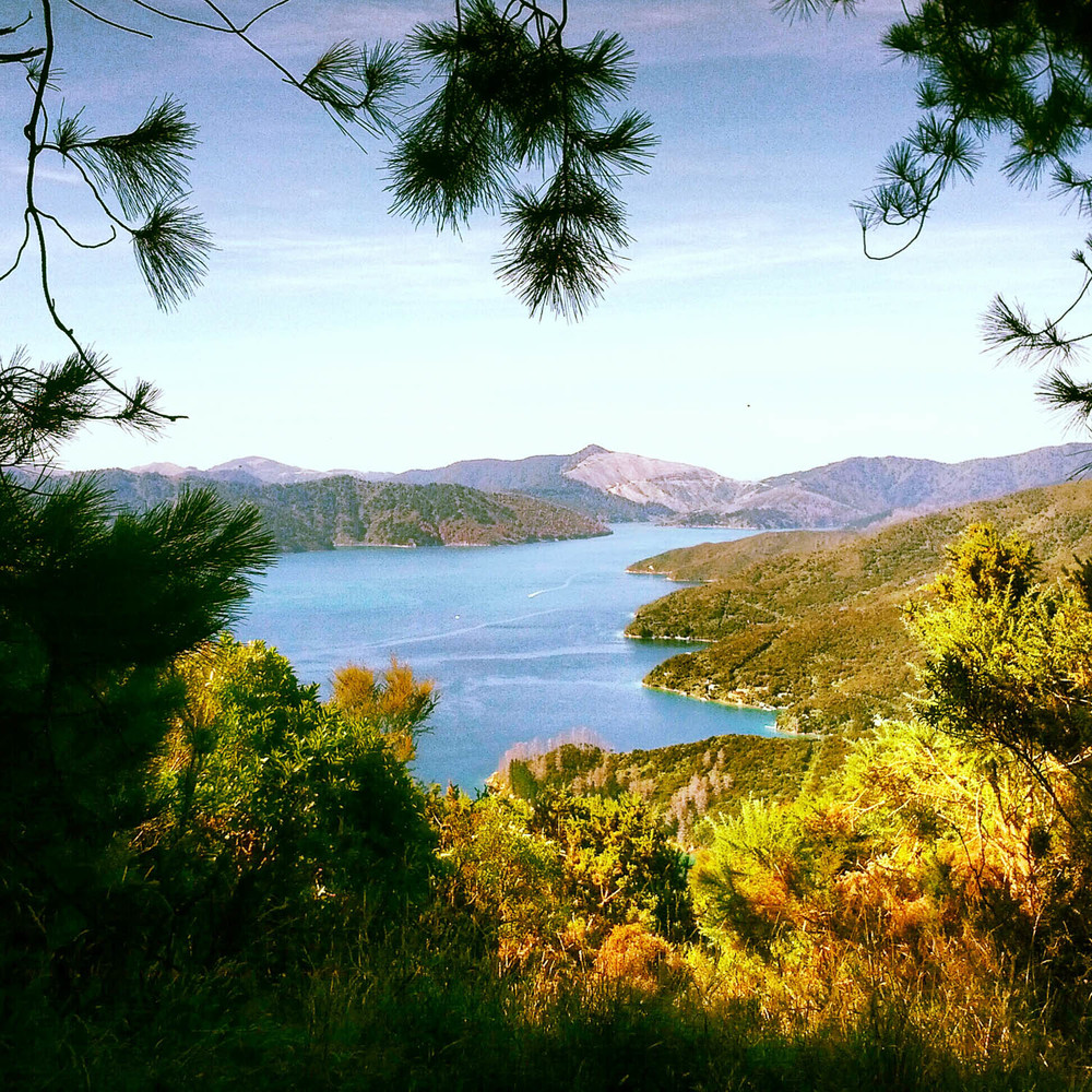 Good morning from the Marlborough Sounds