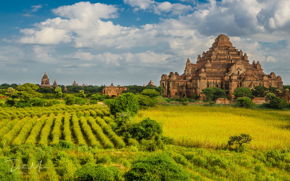 Farmland around (haunted) Dhammayangyi in Bagan - Un-Tour to Myanmar