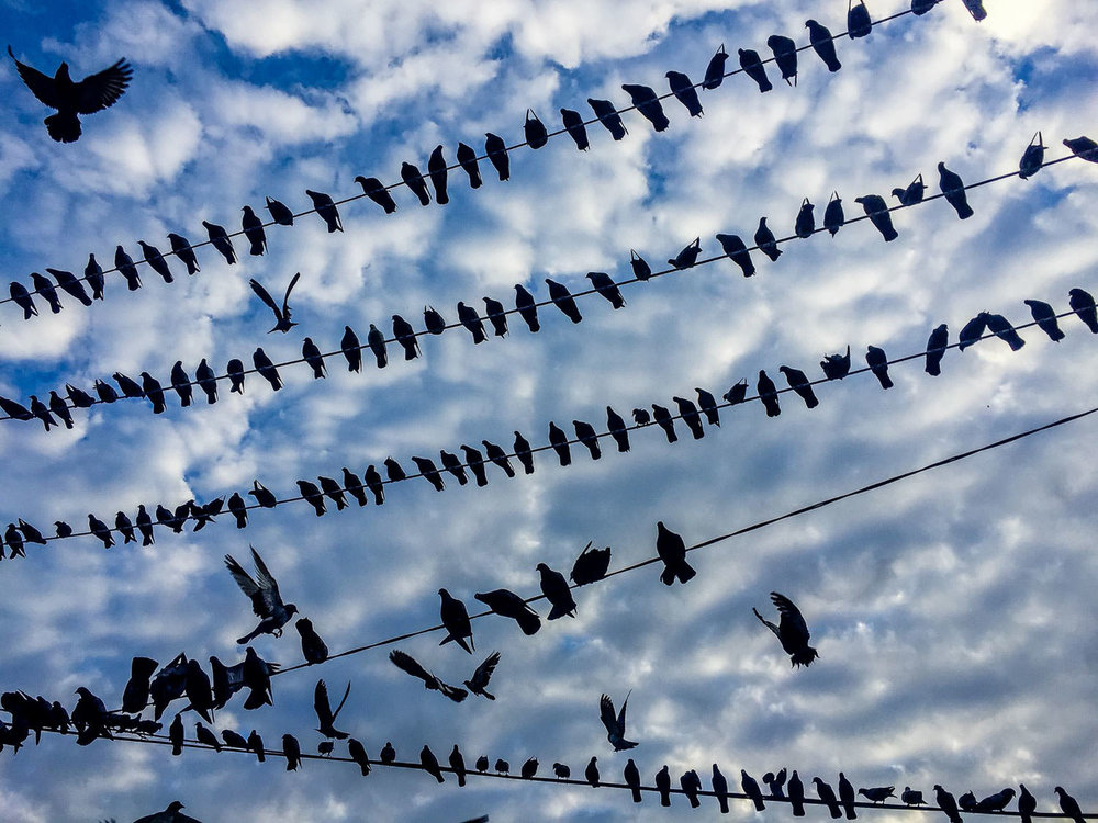 Birds on a wire - Downtown Yangon