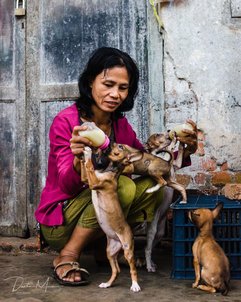 Daw Tin Tin Hla cares for 4 puppies near her home in Mawlamyine. © Dustin Main 2014