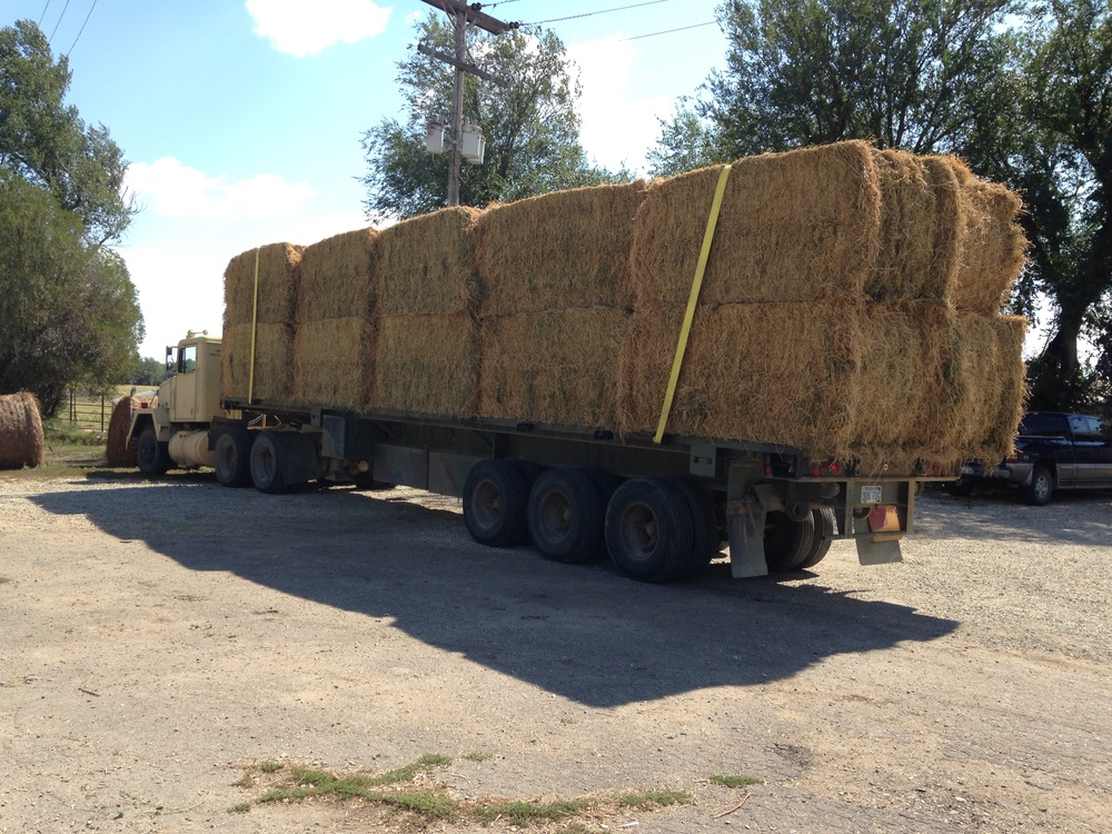 Fresh load of alfalfa.