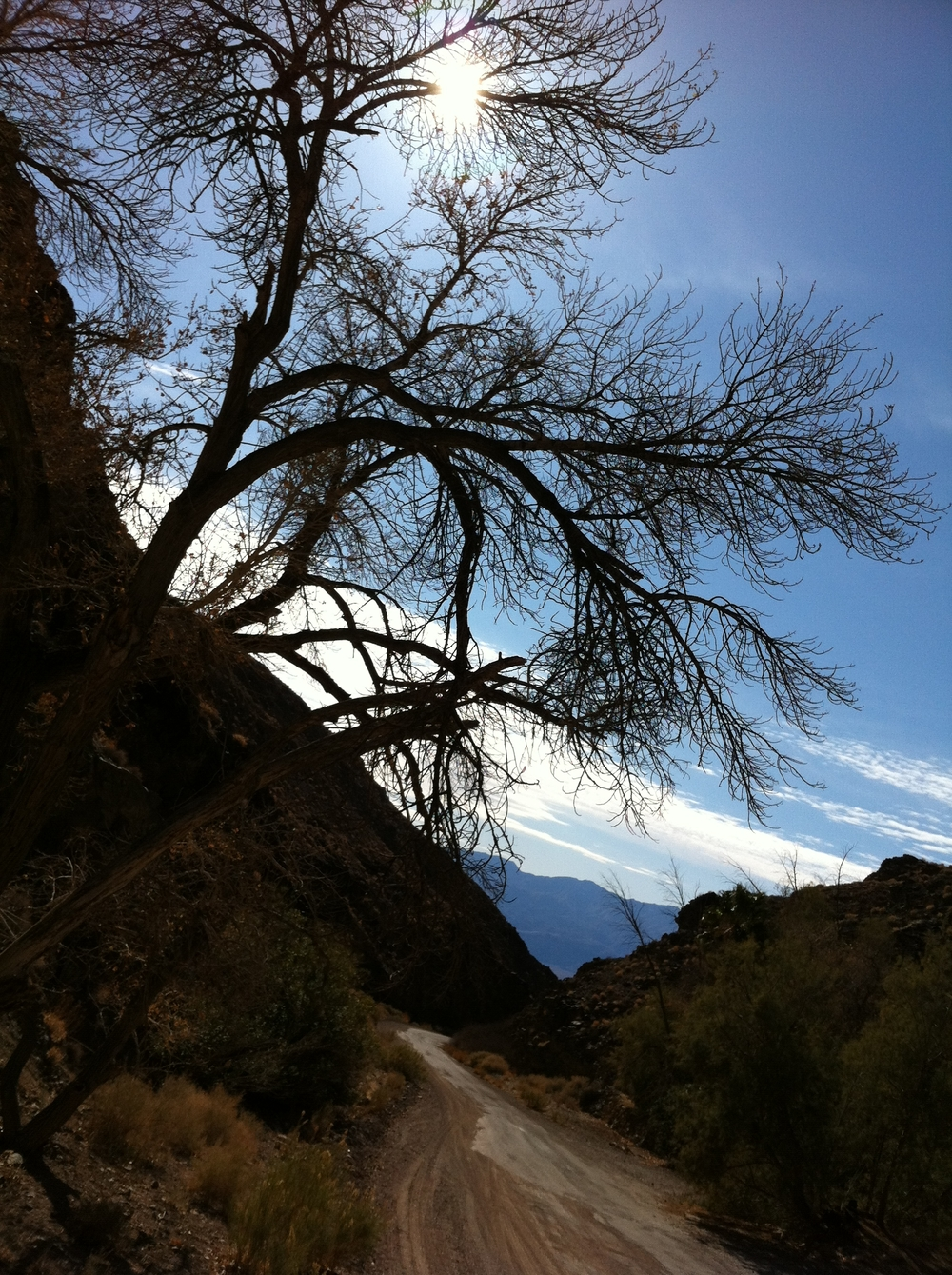 Wildrose Canyon Road, Death Valley