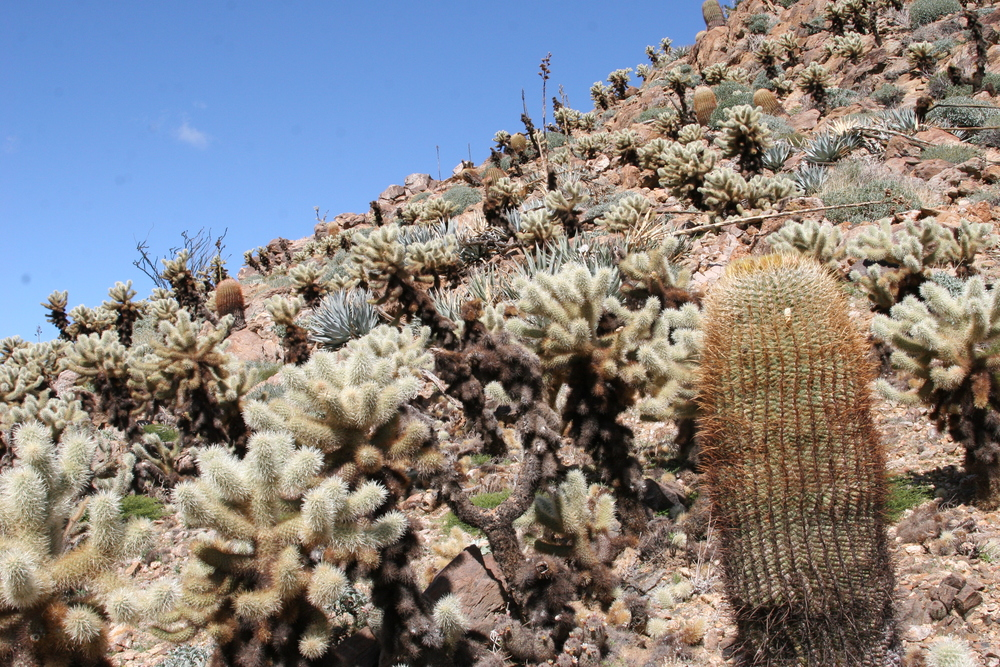 When exploring, it's good to have the knowledge how to avoid cholla cacti.