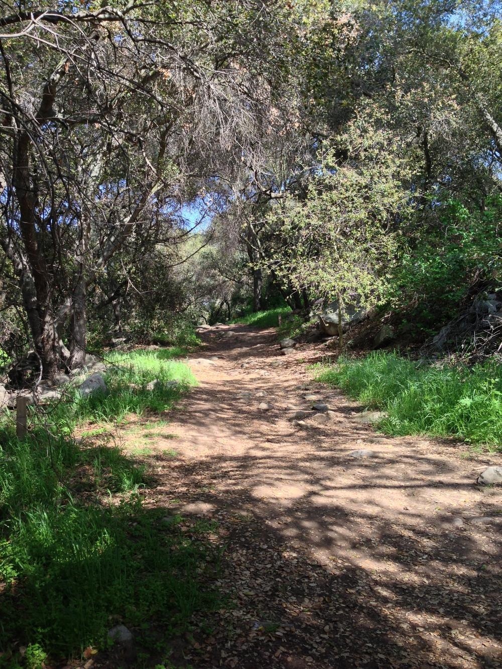 Passing through the Coastal Oak Grove, Elfin Forest