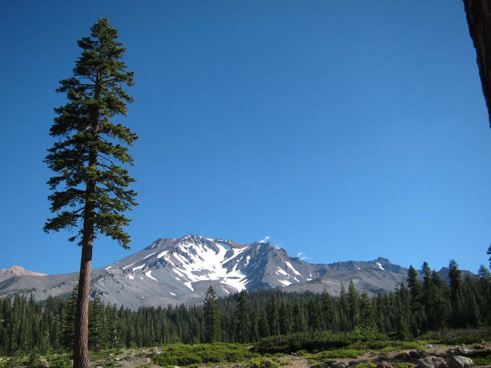 That's a tree - not a UFO. As for the Mount Shasta vortex? It could be in this photo. Maybe.