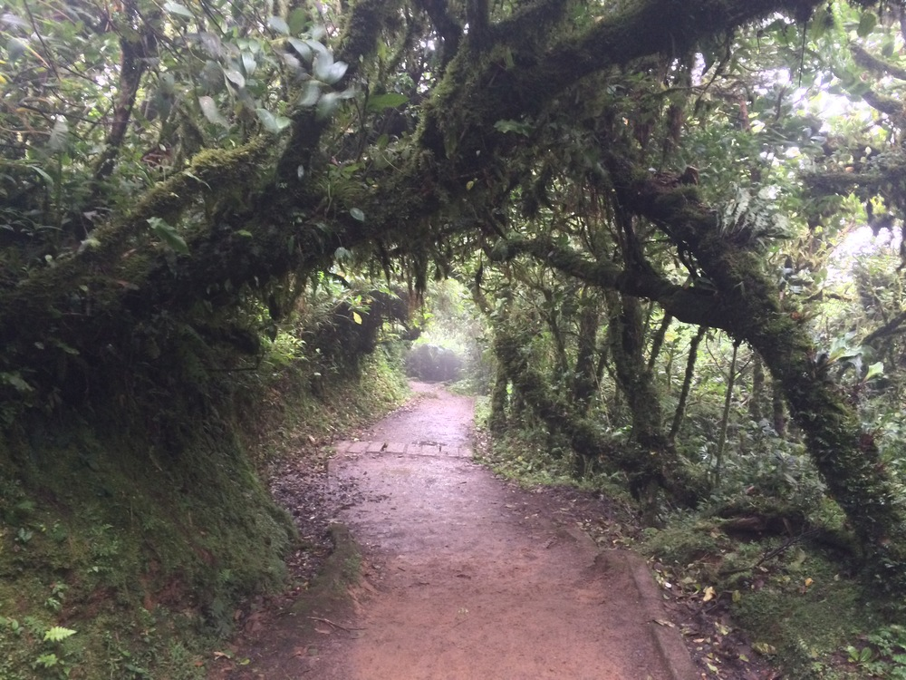 "Trail to ""La Ventana"" Viewpoint, Monteverde Cloud Forest Reserve"