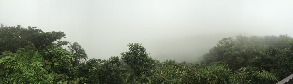 Monteverde Cloud Forest, August 2015