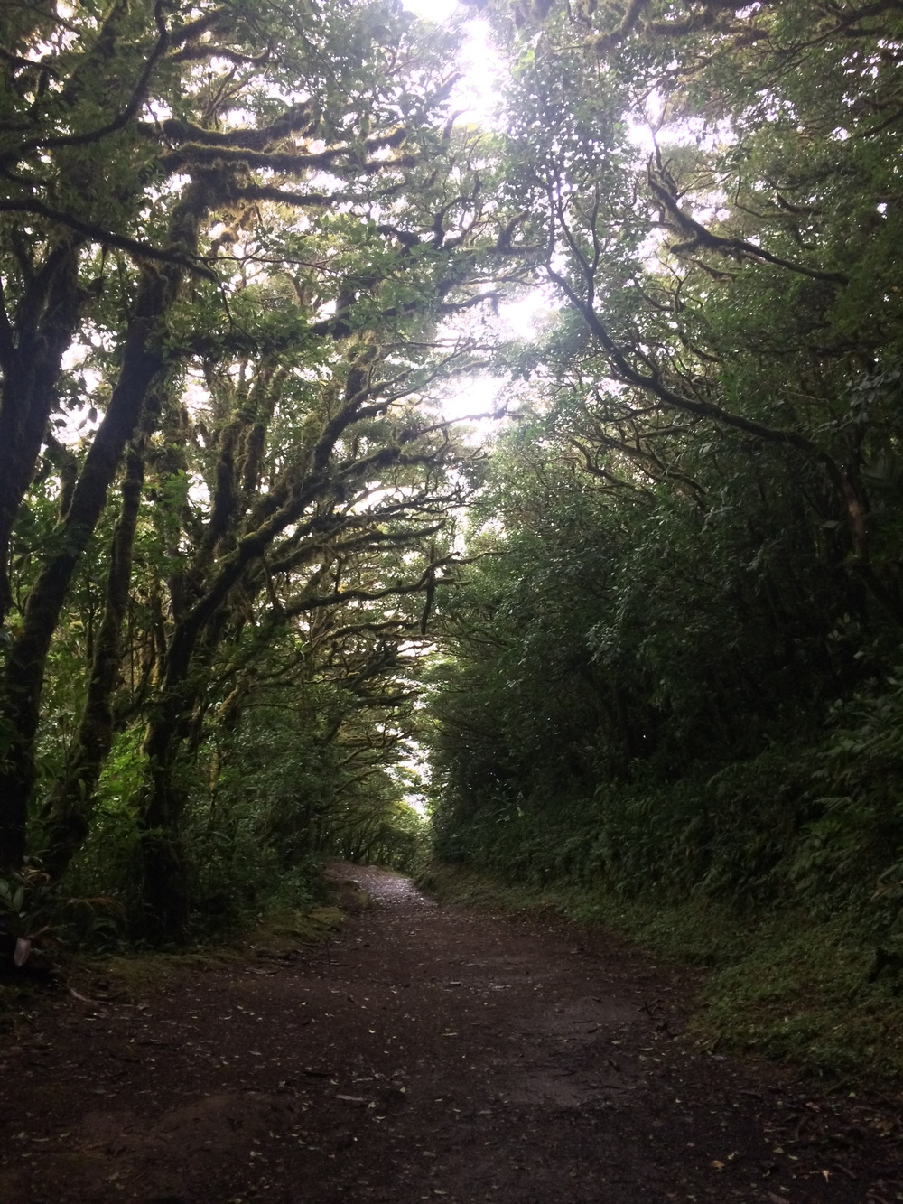 Sendero Camino, Monteverde Cloud Forest Reserve, August 2015