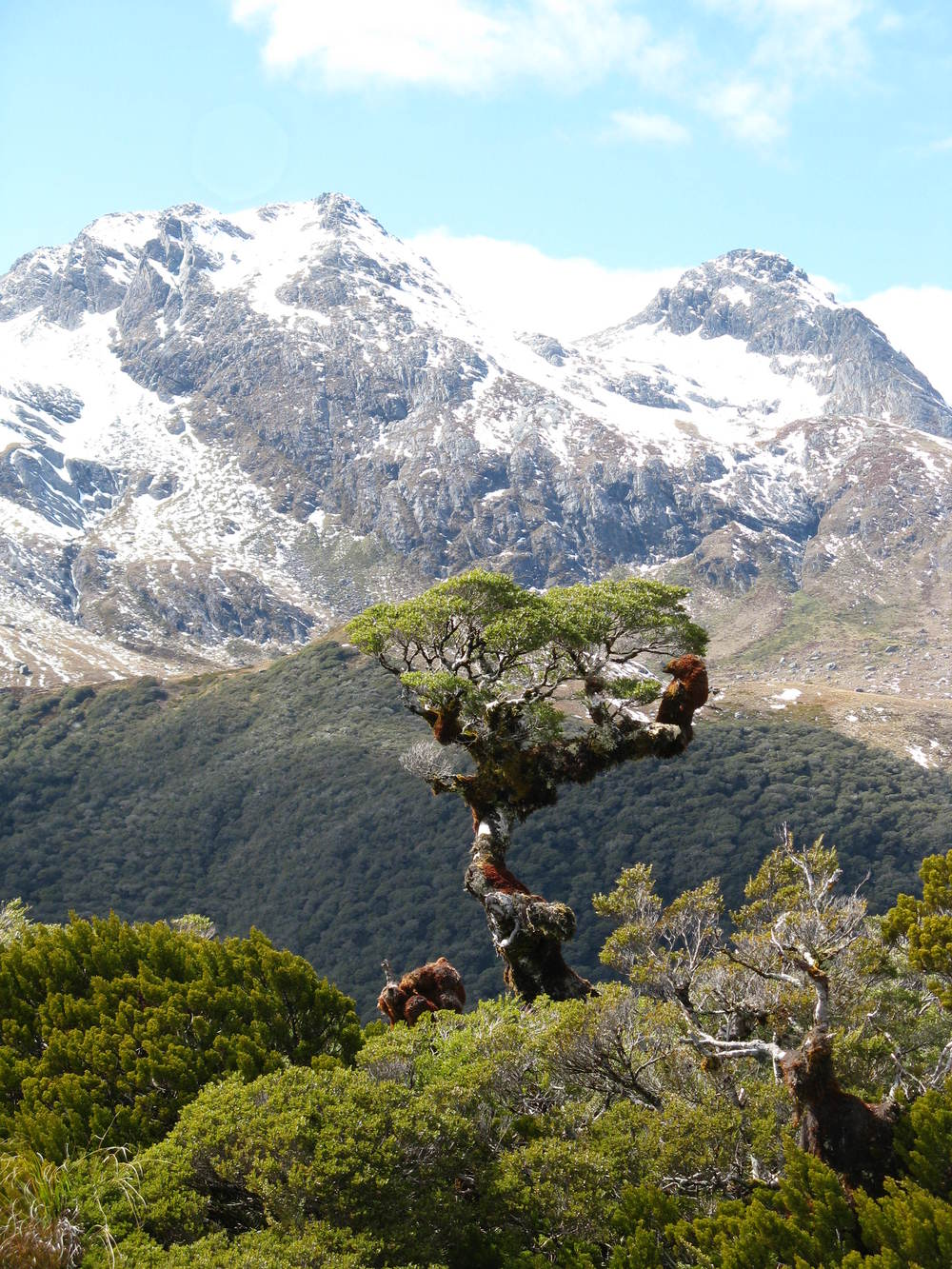 Key Summit, Fiordland National Park, New Zealand