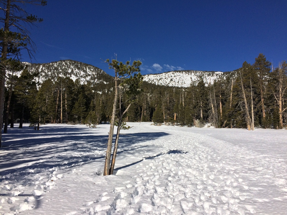 Current snow levels, Round Valley, San Jacinto, January 2016