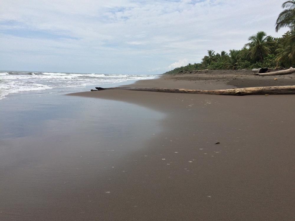 Caribbean coastline, Tortuguero National Park