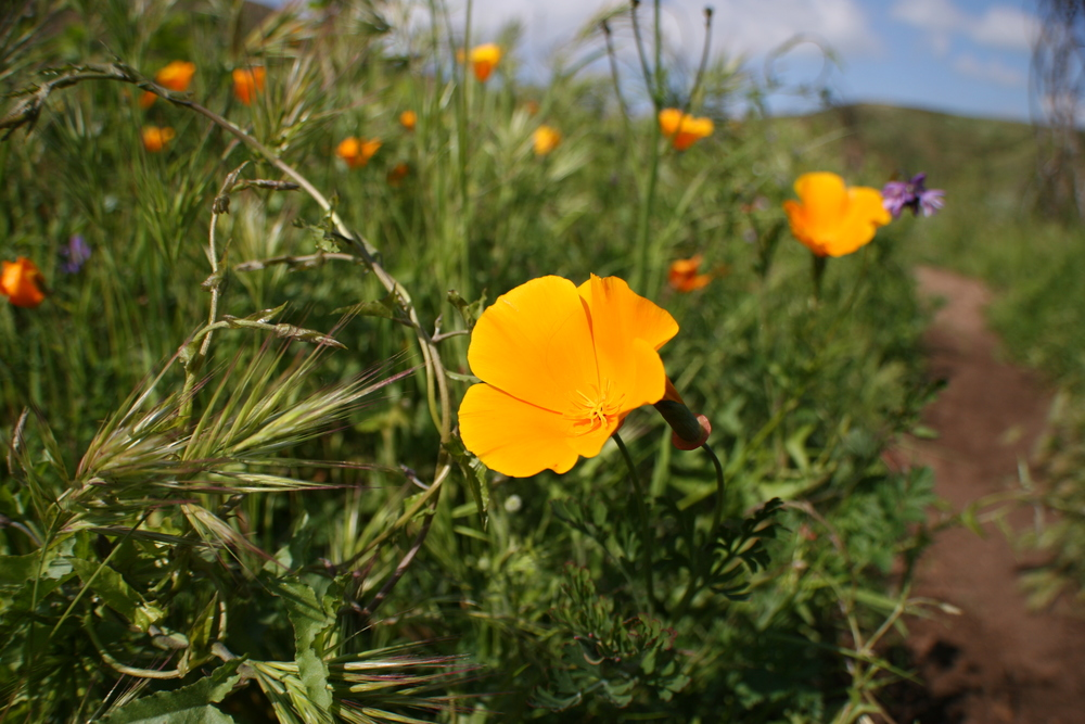 Depending on the season, challengers may see lush growth and seasonal wildflowers.