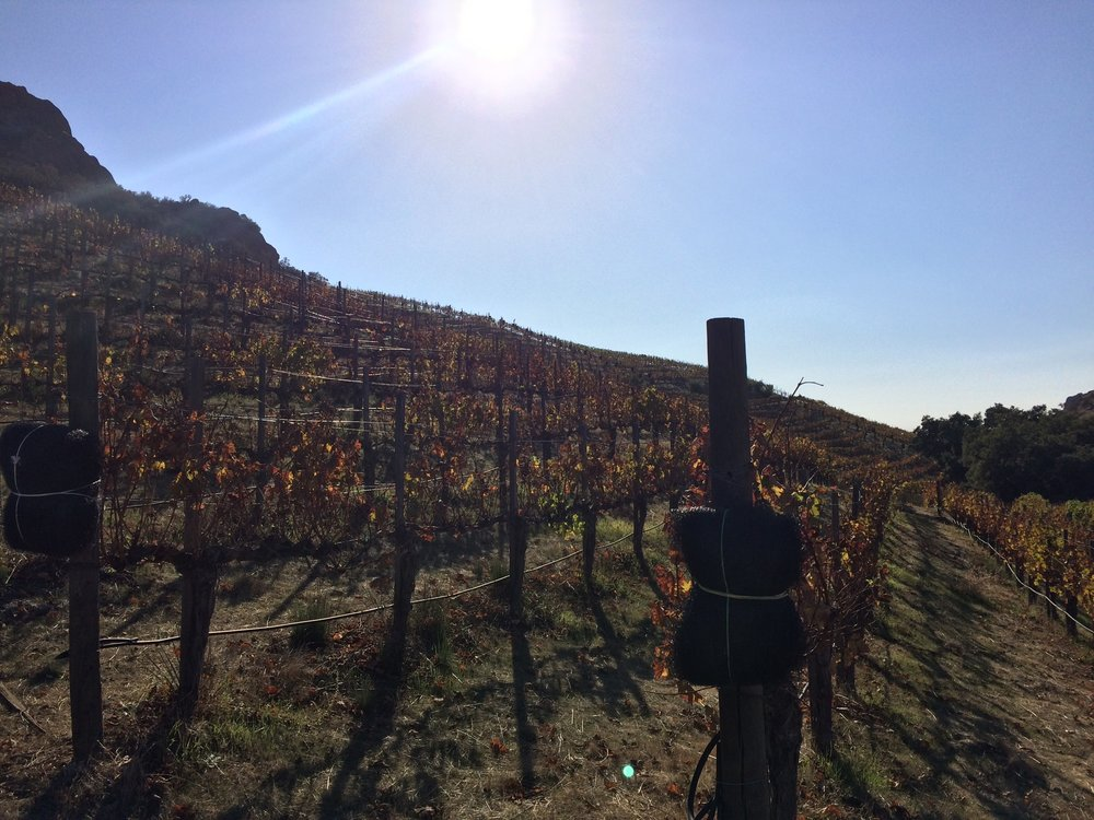 Each hike allows visitors to get up close and personal with the grapes and vines of Malibu Wines.