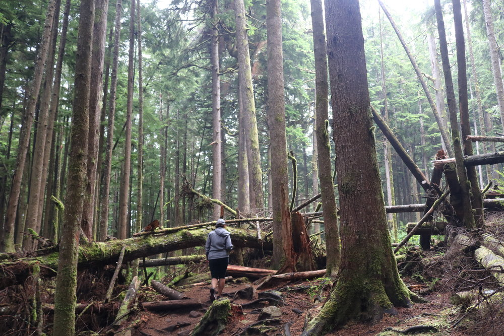 The hike to Mystic Beach on Vancouver Island is a great adventure for all levels of outdoor experience.