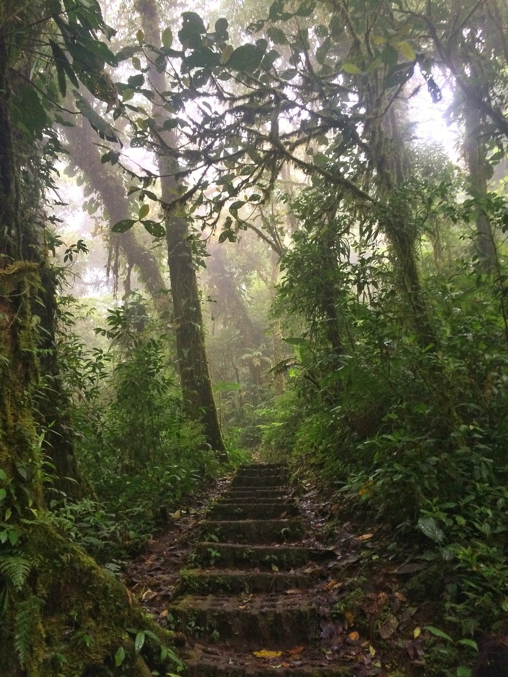 Hiking through Monteverde Cloud Forest is a unique, out of this world experience.