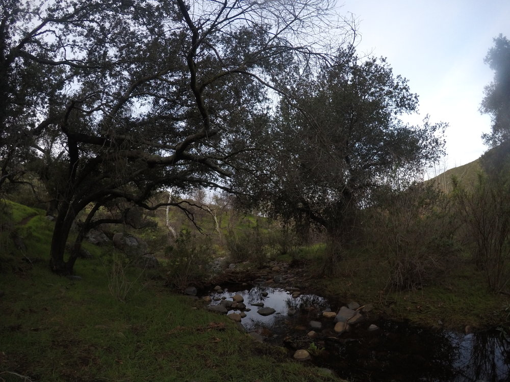 Hollenbeck Canyon, during the wet winter and spring months.